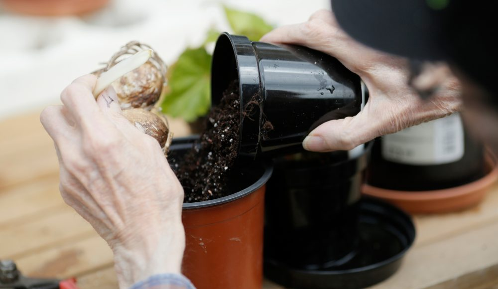 Planting seeds at Prince George Duke of Kent Court