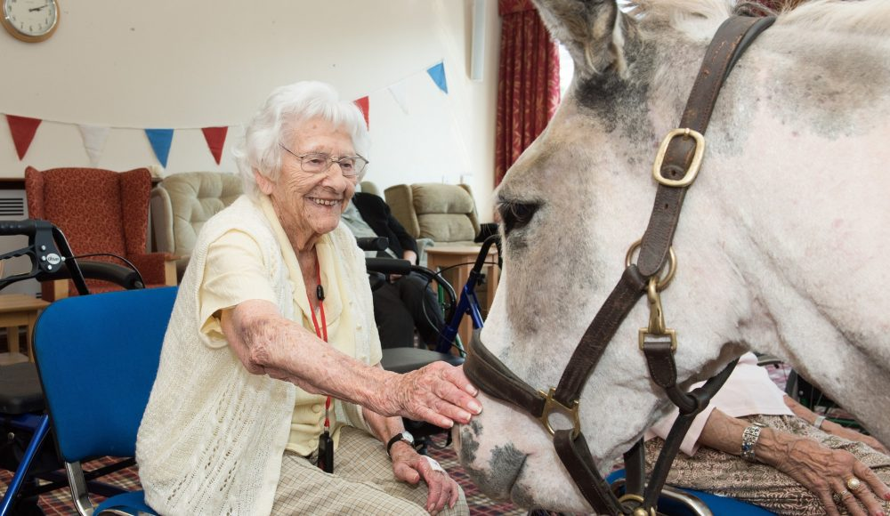 Animal therapy activity at Lord Harris Court